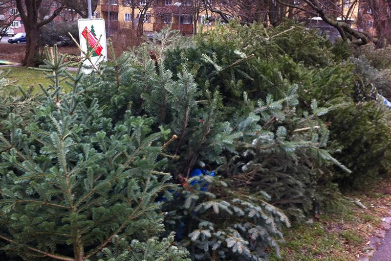 Stuttgart weihnachtsbaum sammelstelle