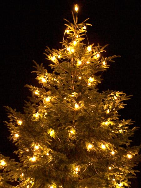 weihnachtsb ume aus stuttgarter w ldern stuttgart weilimdorf. Black Bedroom Furniture Sets. Home Design Ideas