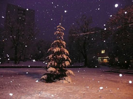 Weihnachtsbaum_Giebel_2008_3