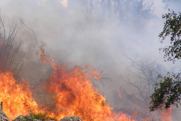 p8240057-waldbrand