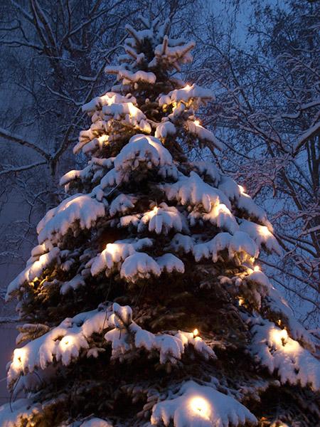 pc244162-weihnachtsbaum