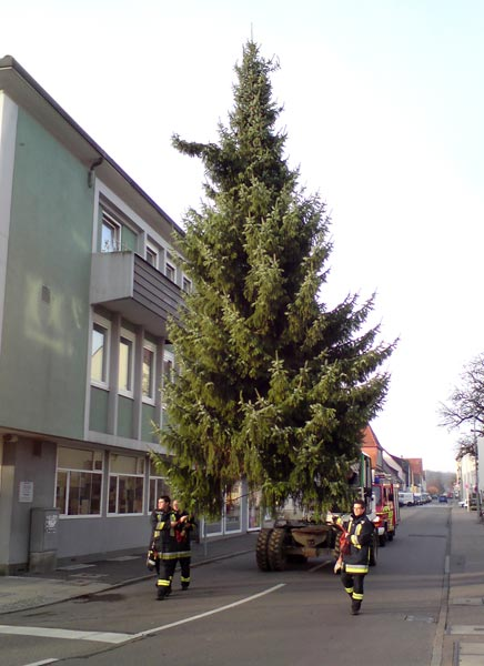 weihnachtsbaum2010