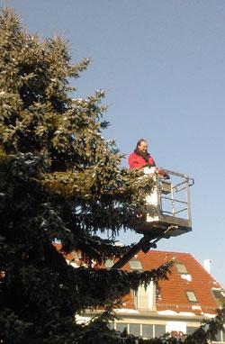 weihnachtsbaum_schrade
