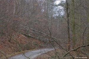 p1140012-windbruch-wald