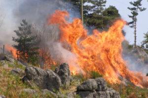 p8240055-waldbrand