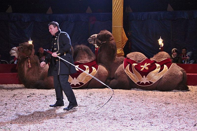 img_7452-zirkus