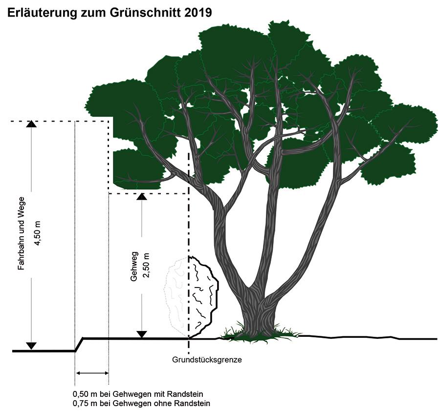 lhs-grafik-gruenrueckschnitt-2019