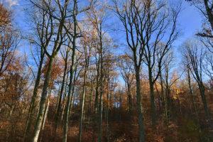 Extremes Klima schädigt Bäume im Stuttgarter Wald – Dringende Verkehrs-sicherungsmaßnahmen notwendig. Foto: Goede