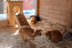 haben sich gut seit November eingelebt: 3 neue Kaninchen auf der Jufa