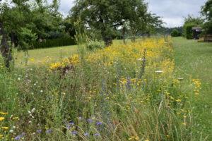 Lebensraum für Insekten. Foto: Tommasi